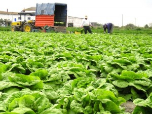 Some farmers in New York say a hike in the minimum wage would wipe out their profits. (Javier Ramos/freeimages.com)
